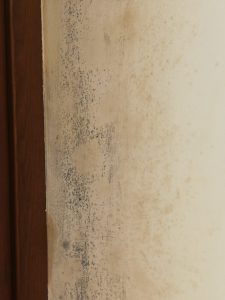 Foto muffe su angolo di parete perimetrale